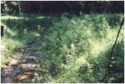 soil bio3